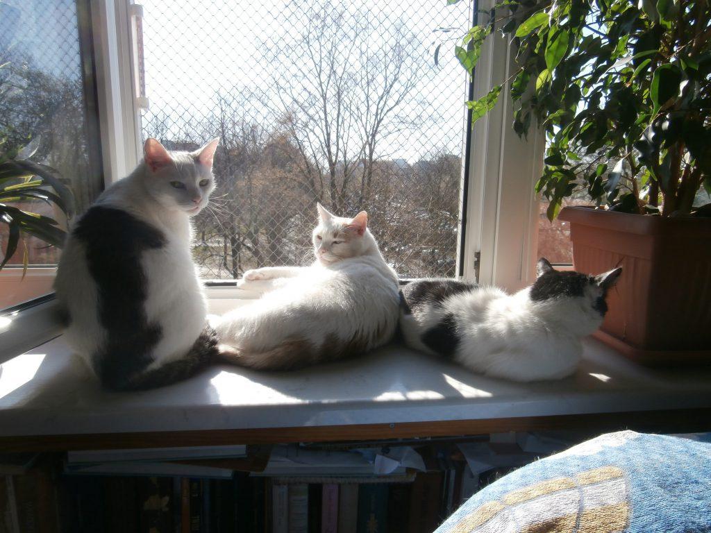 Zabezpiecz okno