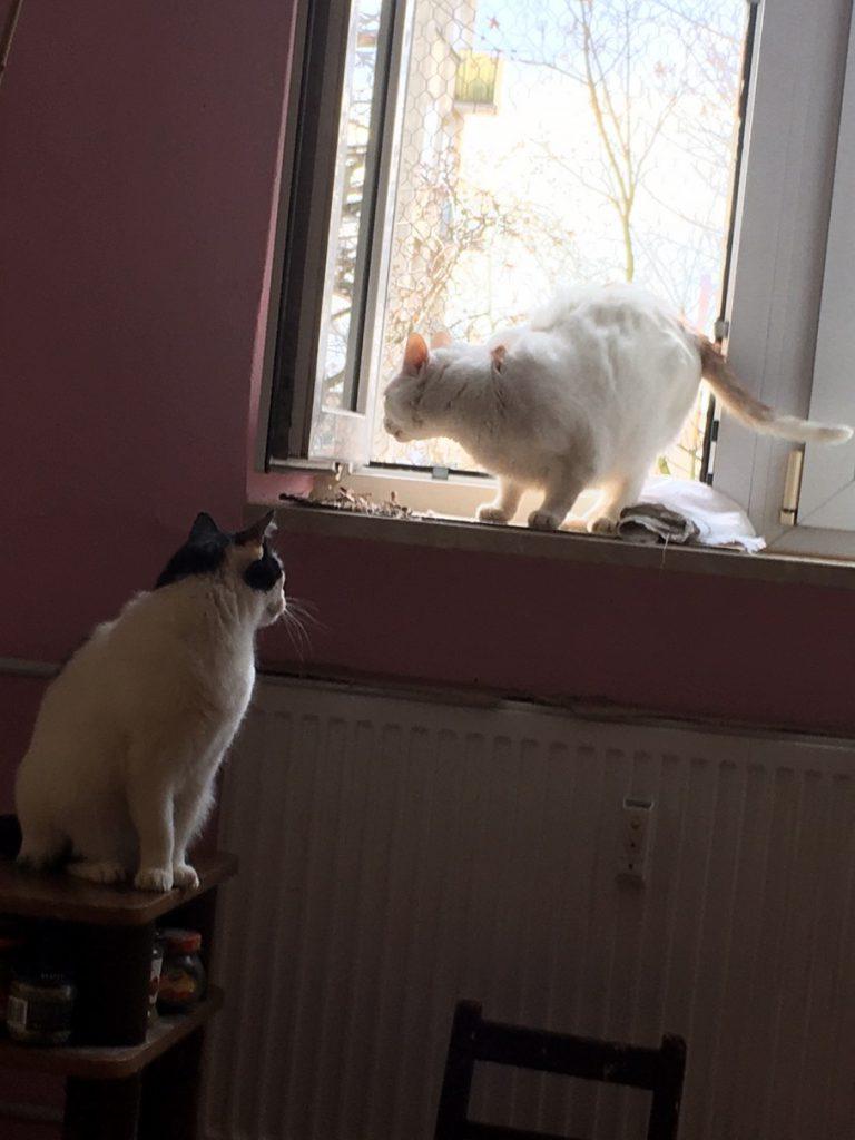 Trzy nowe koty w Fundacji