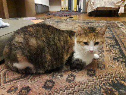 Sonia koteczka do adopcji