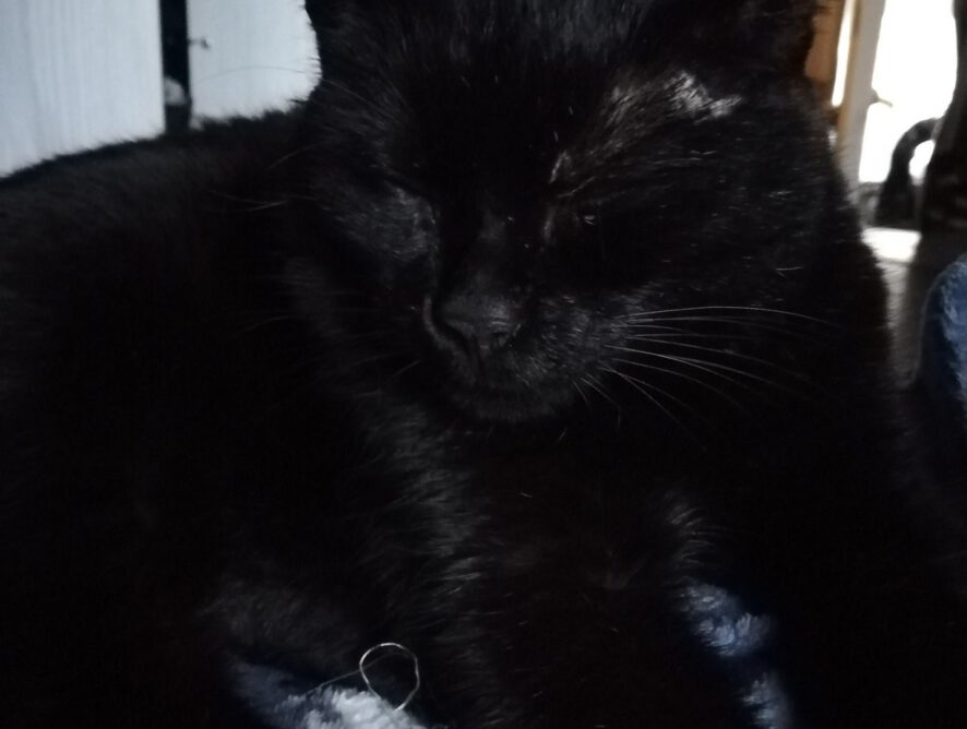 Koteczka Sasza znalazła dom